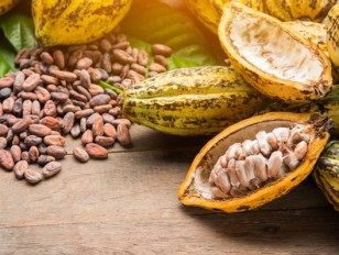 Take a Cake разказва за натуралното и алкализираното какао